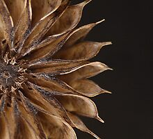 Last Year's Flower (crop version) by Dawne Olson