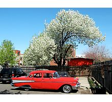 Spring ride, Bronx - New York City  Photographic Print