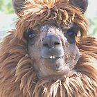 alpaca by conilouz