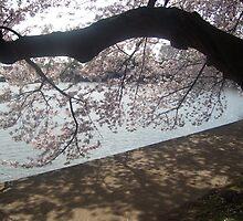 Beautiful Pink Blossoms by mandiepandieX