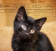 "Post Card From Heaven ""Beautiful Black Kitten"" by Peggy  Volunteer Photographer FOR RESCUE ANIMALS"