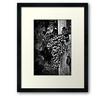 The fruit of the vine Framed Print