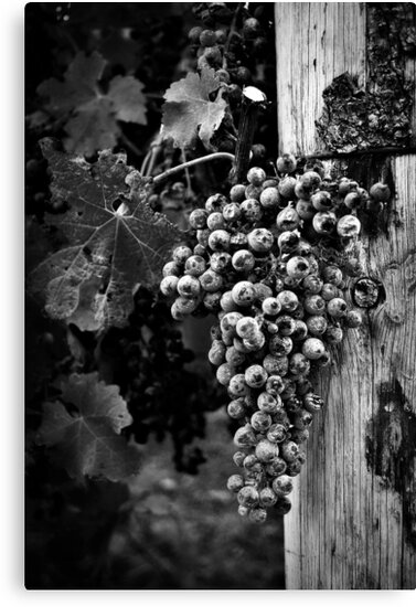 The fruit of the vine by SD Smart