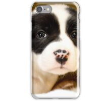Cute Spots on Nose  Border Collie Mix  iPhone Case/Skin