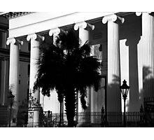 Hibernian Palmetto Photographic Print