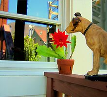 Nipper In The Bud by Michael May