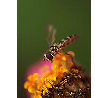 Flower Fly Fantasy Photographic Print