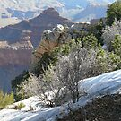 LAYERS OF THE GRAND CANYON by AMHERN0525