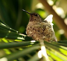 Mama Hummer by DARRIN ALDRIDGE