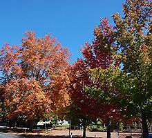 Autumn Has Arrived. Stirling S.A by patapping
