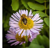 Successful Bee is Successful Photographic Print