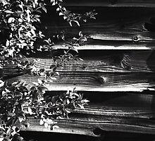 Weathered Wood on the old Saya Kaido, Nagoya Japan by Jordi Vollom
