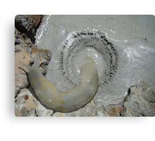 My Sulfuric Acid Slug Discovery Today Compared to a Pakistani Rupee Canvas Print