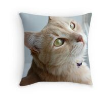 Cream Angora cat Throw Pillow