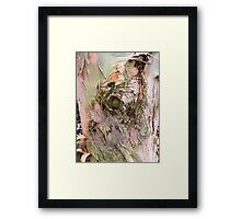 The Eye of the Tree Framed Print
