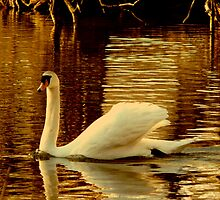 SWAN DANCE by KENDALL EUTEMEY