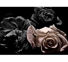 monocolor roses Photographic Print