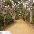 Road to Shelley Beach by georgieboy98