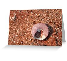 Trochus Shell Greeting Card