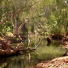 the creek at Cobbold Gorge by Chris Cohen
