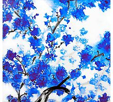 Blue Cherry Blossoms Photographic Print