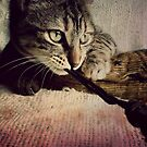Boo the cat...  by Louise LeGresley