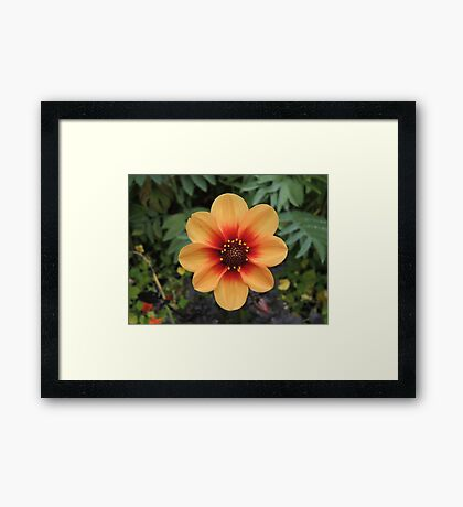 Sunshine In The Soil Framed Print