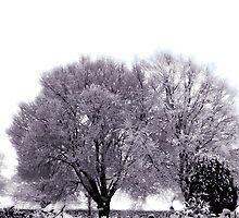 Winter Love by Jonathan  Sexton