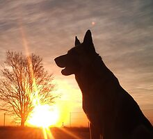 Dog Silhouette... by Qnita