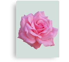 Pink rose Canvas Print