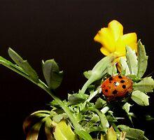 Ladybugs Life by Tanya Bowers