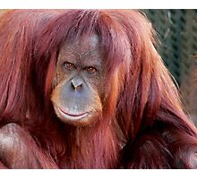 Orang Utan Melbourne Zoo Photographic Print