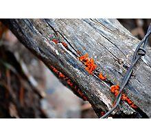 between the cracks Photographic Print