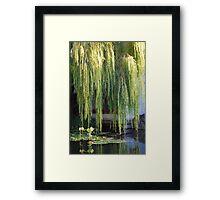Golden Willow Framed Print