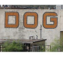 Dog is Among Us Photographic Print