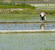 Rice Planting by ablyth