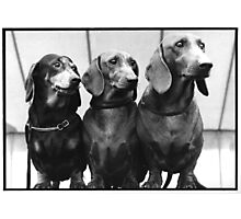 Calbert, Dilbert and Molly! Photographic Print