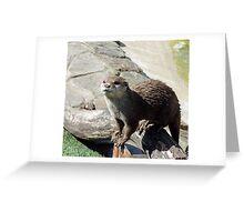 Mr  Beaver Greeting Card