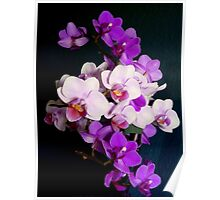 Bunch of orchids Poster