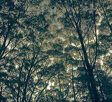 Lost by Amagoia  Akarregi