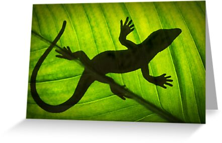 Flat Out Like a Lizard . . . . . . . by Sharon Hammond