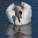 Simply Swans by Krys Bailey