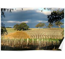 Howard Vineyard - Nairne Poster