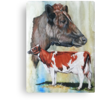 Ayrshire Cattle Canvas Print