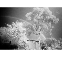 The Midnight Tree Photographic Print
