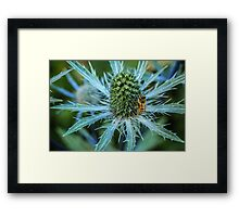 Bee on Sea Holly Framed Print