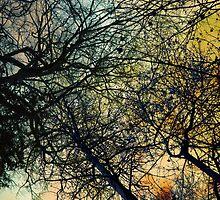 look up by Miroslava Balazova
