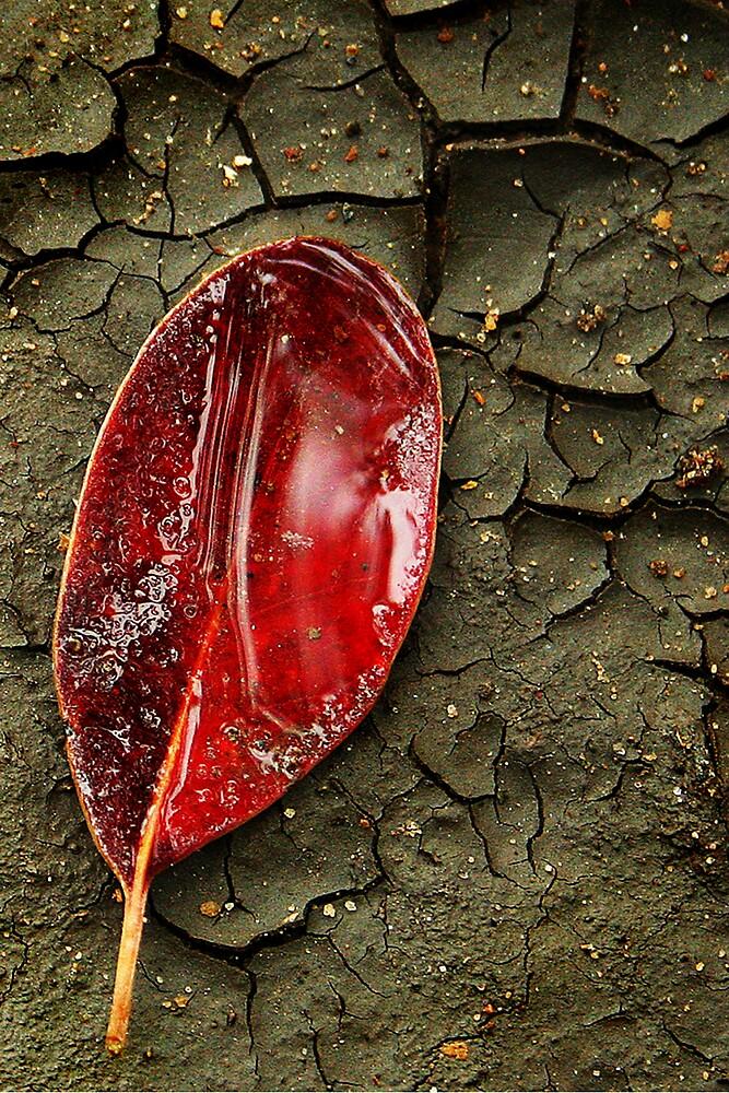 Red mangrove leaf by ingridewhere
