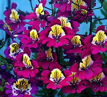 Flower - 10 by Atanu Chanda