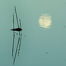 Moon reflected with reeds by ingridewhere